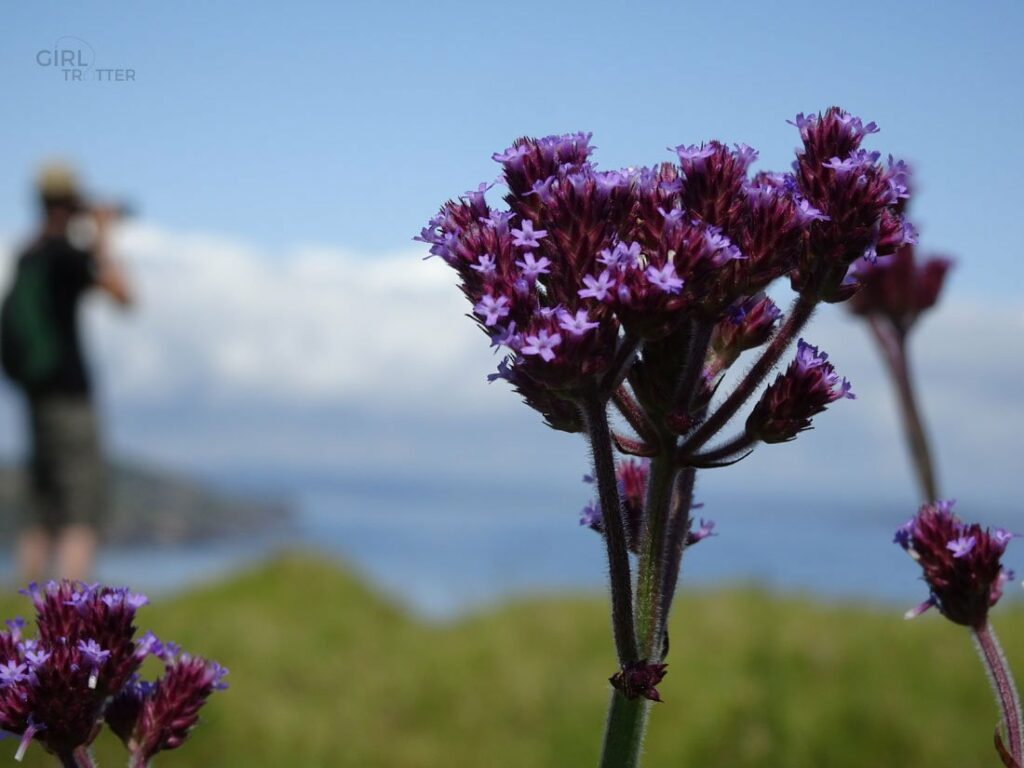 Bay of islands fleurs de montagne sauvage - Girltrotter