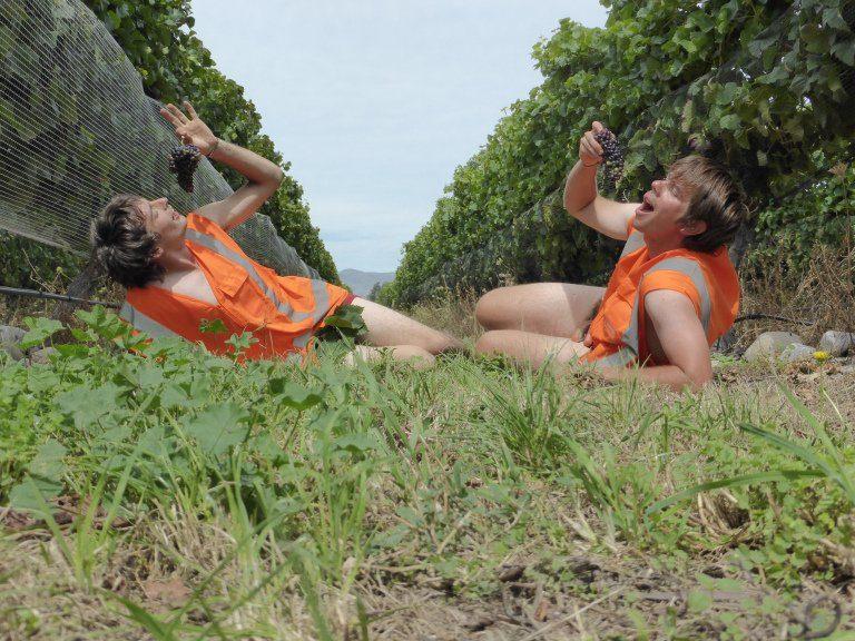 Blenheim dans la région viticole du Marlborough en Nouvelle-Zélande - Girltrotter