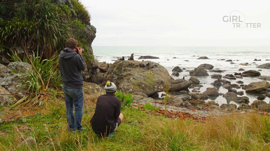 Otaries et Péninsule de Kaikoura en Nouvelle Zélande - Girltrotter