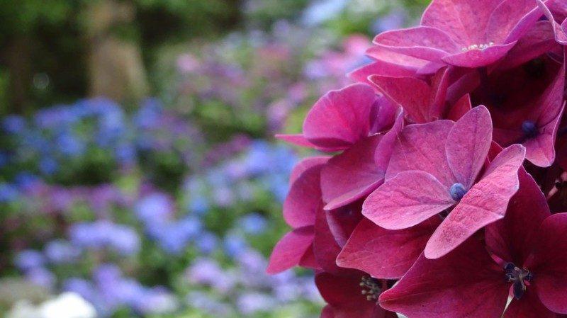 Wellington-jardin-botanique-Girltrotter