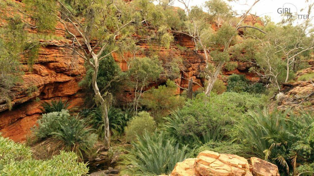 jardin-deden-kings-canyon-australie-girltrotter