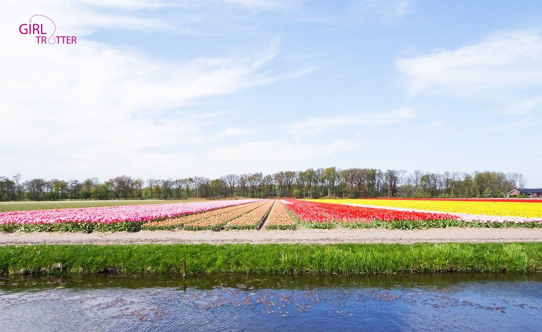 Keukenhof et champs de fleurs en hollande - Girltrotter