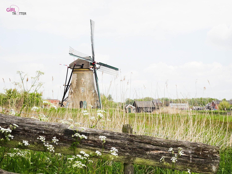 Roadtrip aux pays-bas- Kinderdijk Hollande