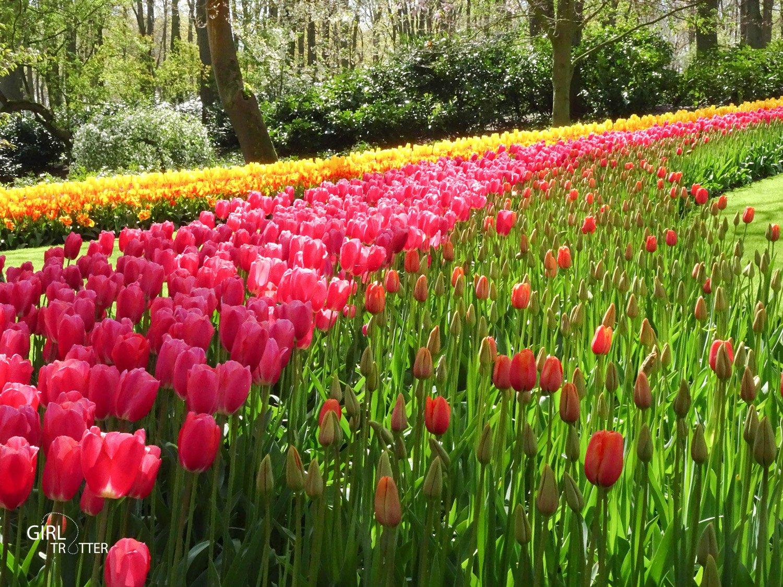 Voir les champs de fleurs Hollande - Keukenhof