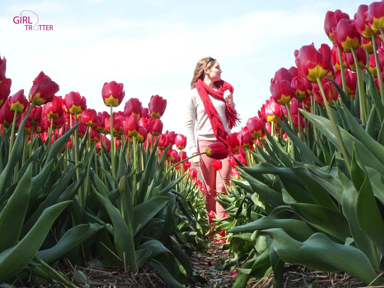 Voir les champs de fleurs en HOllande - Keukenhof