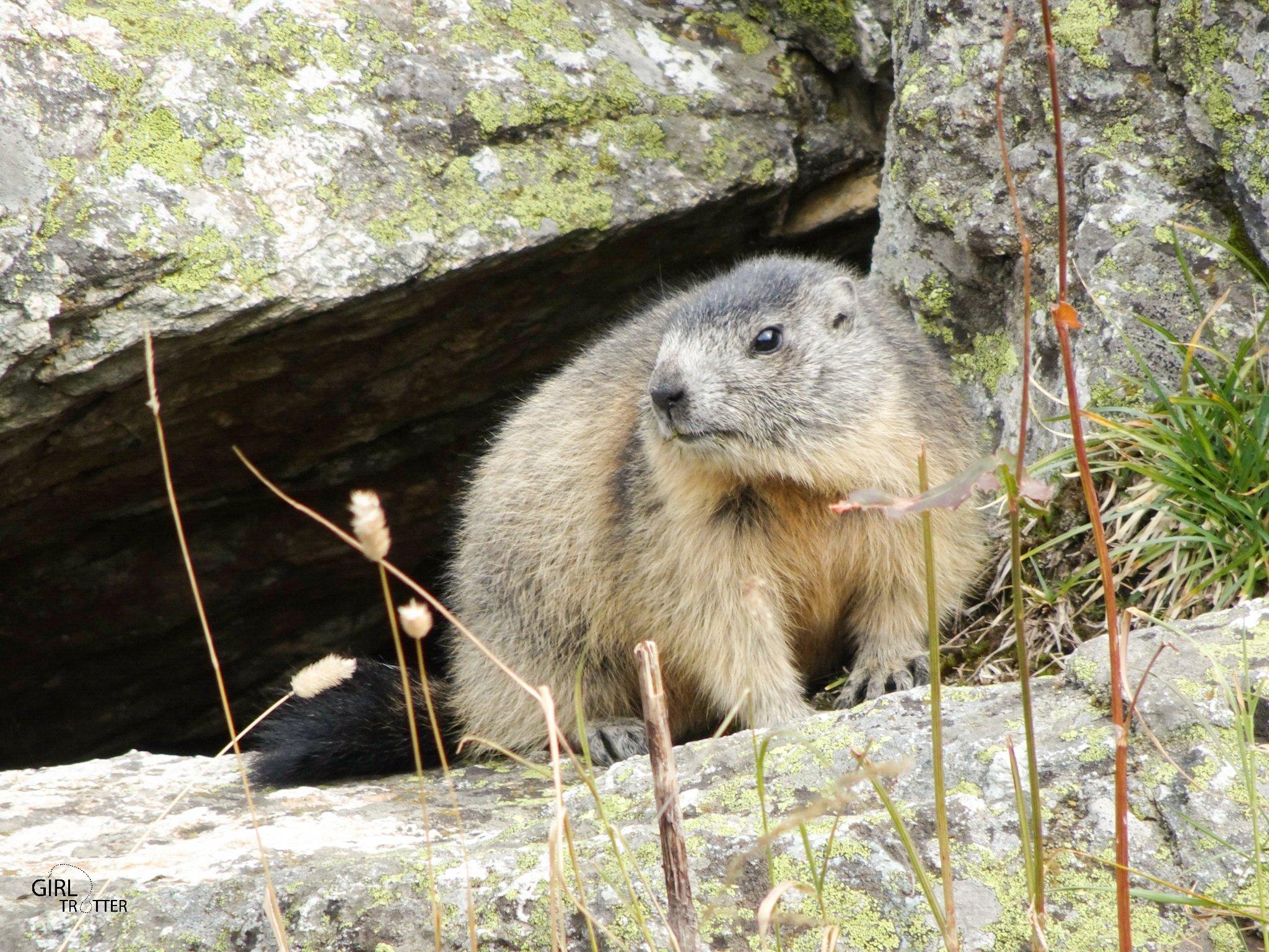 Rando des 4 lacs - marmotte