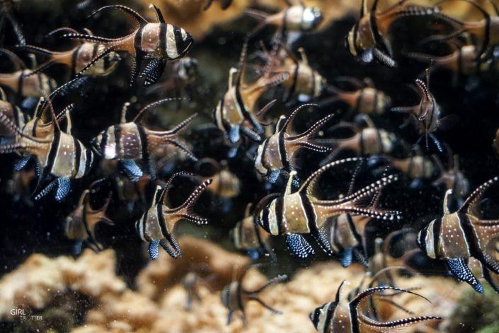 Grand aquarium de Nausicaa à Boulogne-sur-Mer