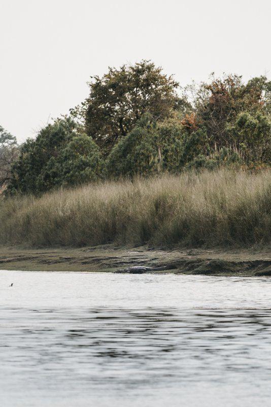 Crocodile des marais - Rencontre avec un tigre dans la jungle au Nepal - Bardia National Park - Recit de voyage