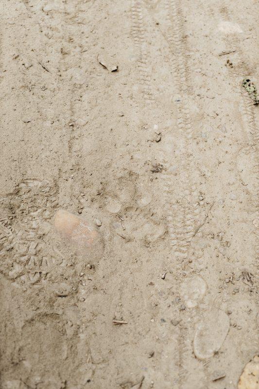 Empreinte de tigre du Benghal sauvage - Rencontre avec un tigre dans la jungle au Népal - Bardia National Park - Récit de voyage