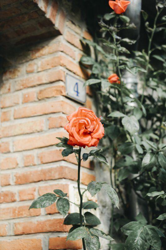 Gerberoy, village au mille roses