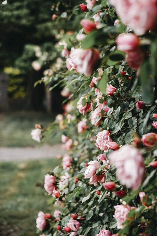 Gerberoy village fleuri