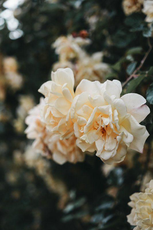 Jardin de roses de Gerberoy - Jardin Henri le Sidaner