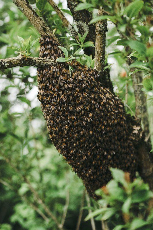 Essaim d'abeilles Gite La Maison dans la Prairie à Bernot, Aisne - Tourisme Picardie Hauts-de-France