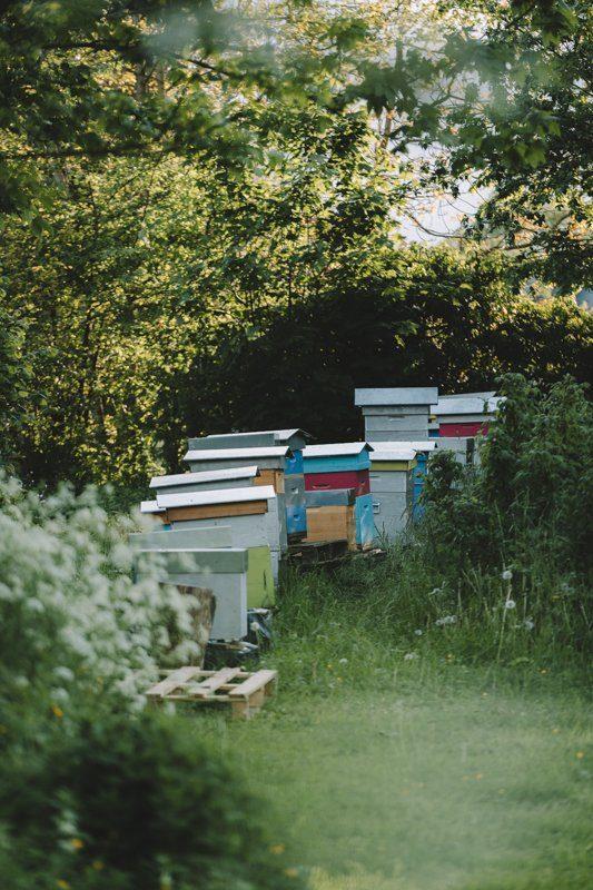 Ruches du Gite La Maison dans la Prairie à Bernot, hébergement weekend campagne dans l'Aisne - Tourisme Hauts-de-France