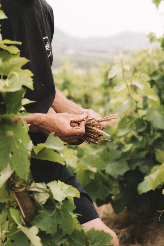 Dégustation de vins Saint Joseph avec Pascale Jamet à Arras-sur-Rhône en Ardèche